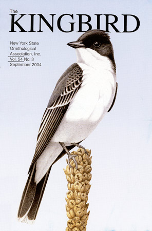 Kingbird Cover