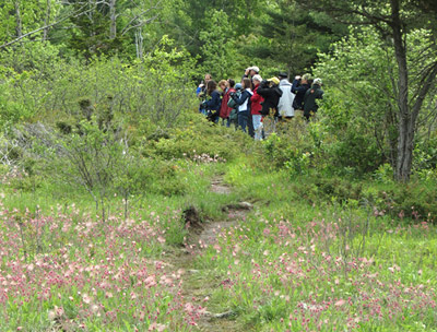 Chaumont Barrens with prairie smoke flowers, photo by Carena Pooth