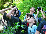 Looking for the White-eyed Vireo at Muttontown Preserve, photo by Carena Pooth